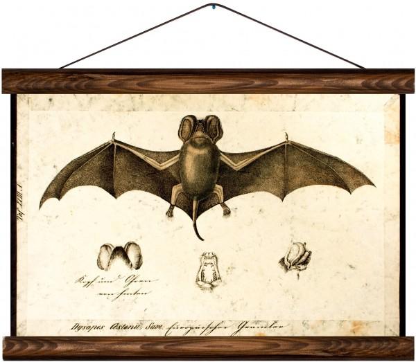 Vintage Lehrtafel  - Bat