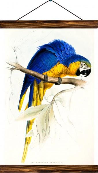 Vintage Lehrtafel  - Parrot