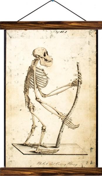 Vintage Lehrtafel  - Skeleton of a monkey