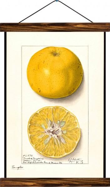 Vintage Lehrtafel  - Lemon