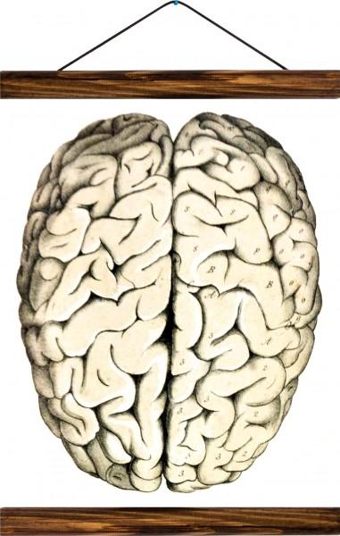 Vintage Lehrtafel  - Human brain