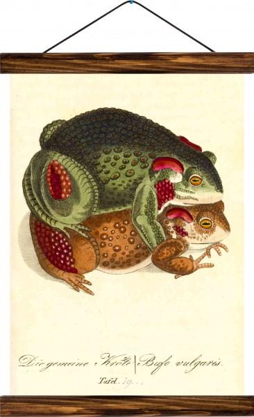 Vintage Lehrtafel  - Toads