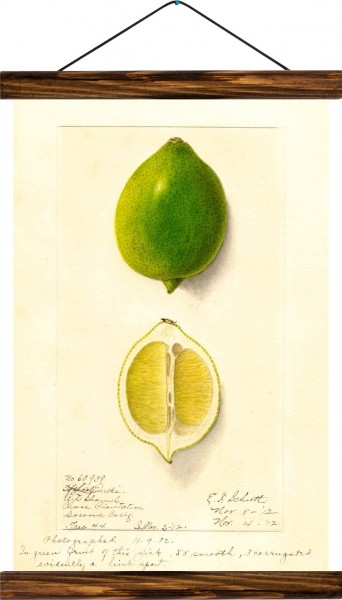 Vintage Lehrtafel  - Lime