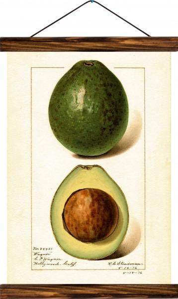 Vintage Lehrtafel  - Avocado