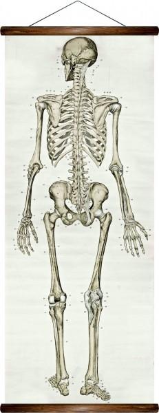 Vintage Lehrtafel  - Human skeleton