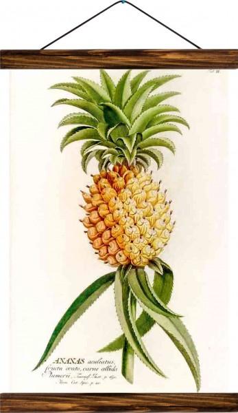 Vintage Lehrtafel  - Pineapple