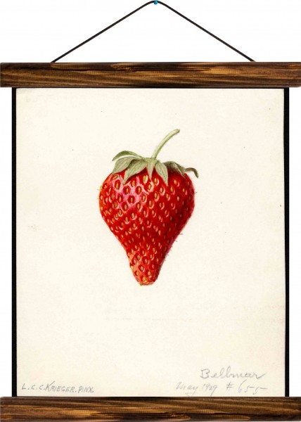Vintage Lehrtafel  - Strawberry
