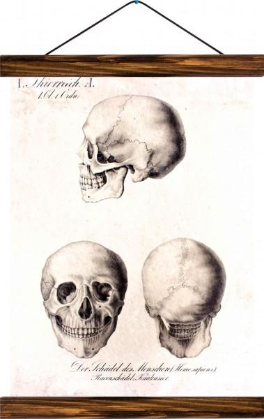 Vintage Lehrtafel  - Human head