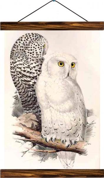 Vintage Lehrtafel  - Owls