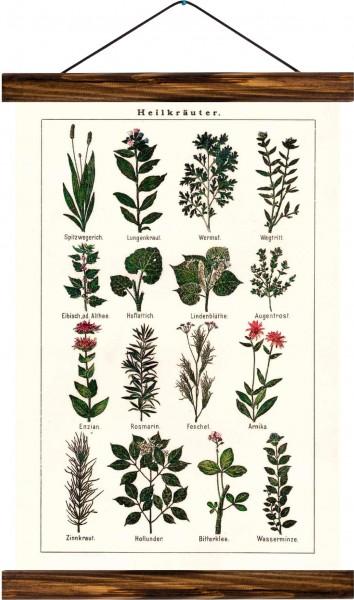 Vintage Lehrtafel  - Medicinal herbs